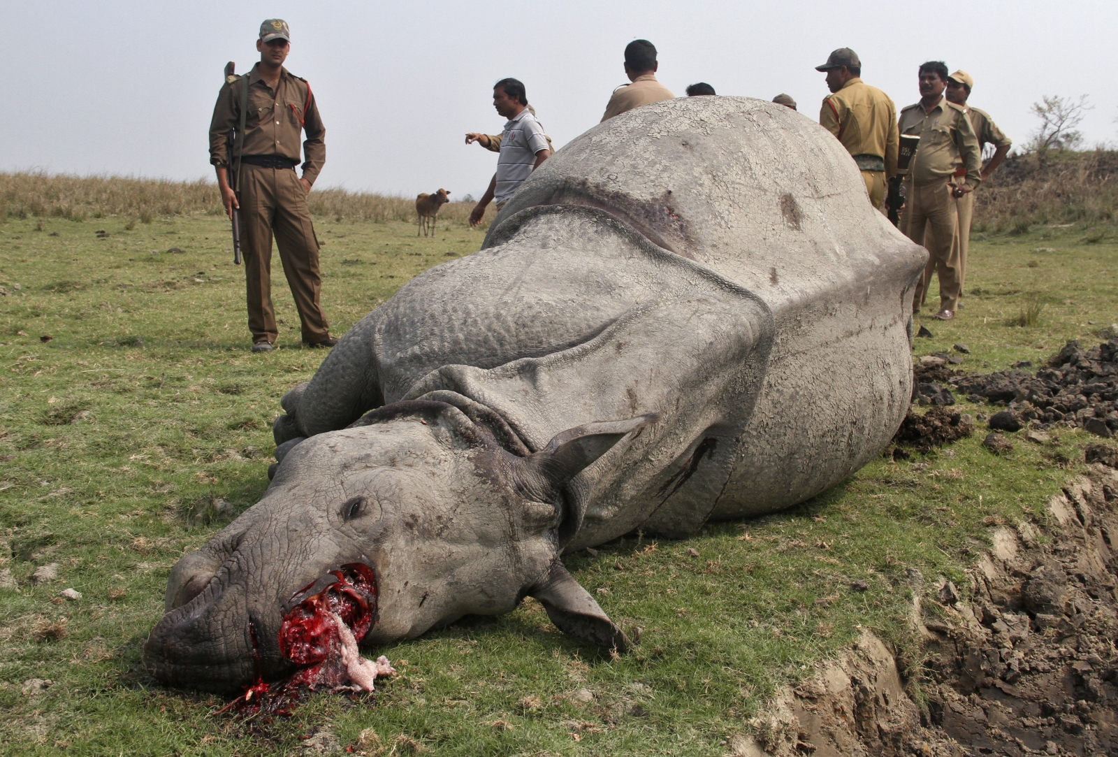 taking a look at poaching To address this topic let's take a look at what some serious online research produced the encyclopedia of earth defines poaching like this: poaching is the illegal hunting, killing or capturing of animals.