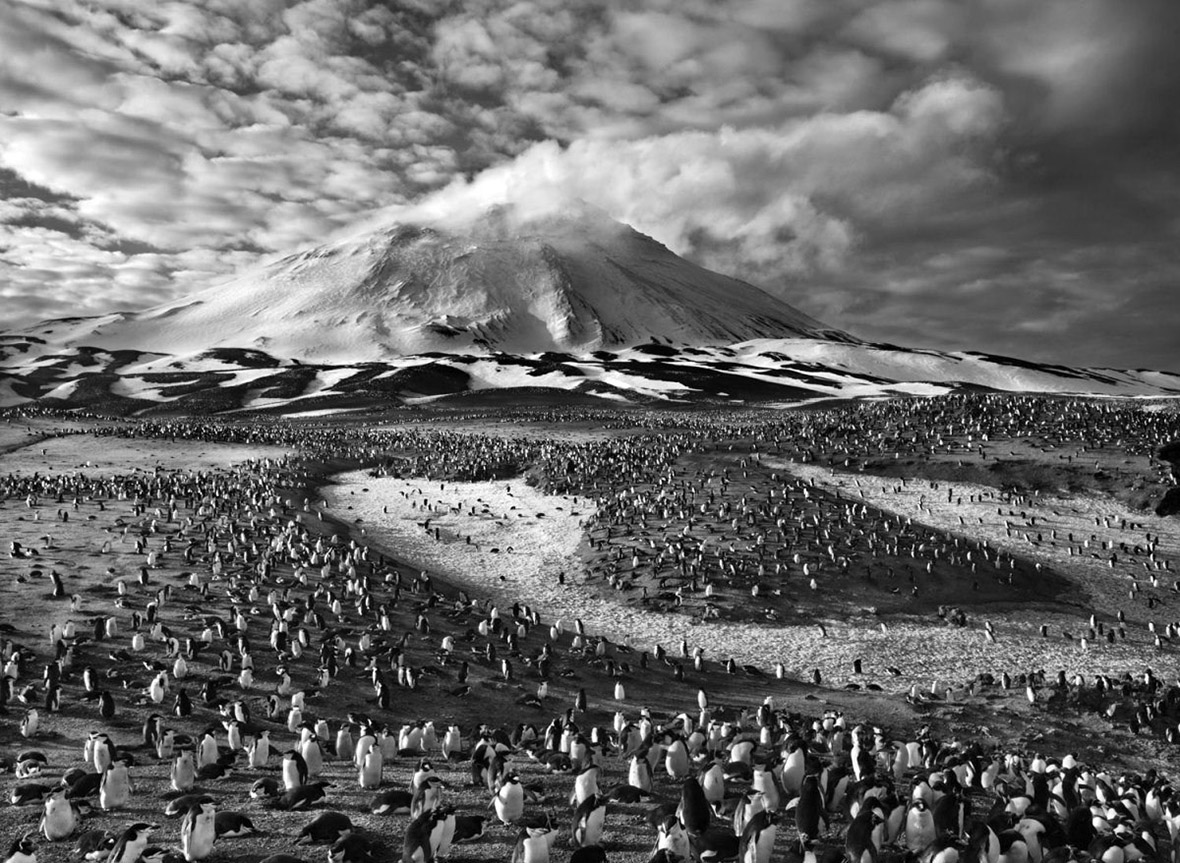 Sebastiao Salgado, Zavodovski Island, South Sandwich Islands, 2009