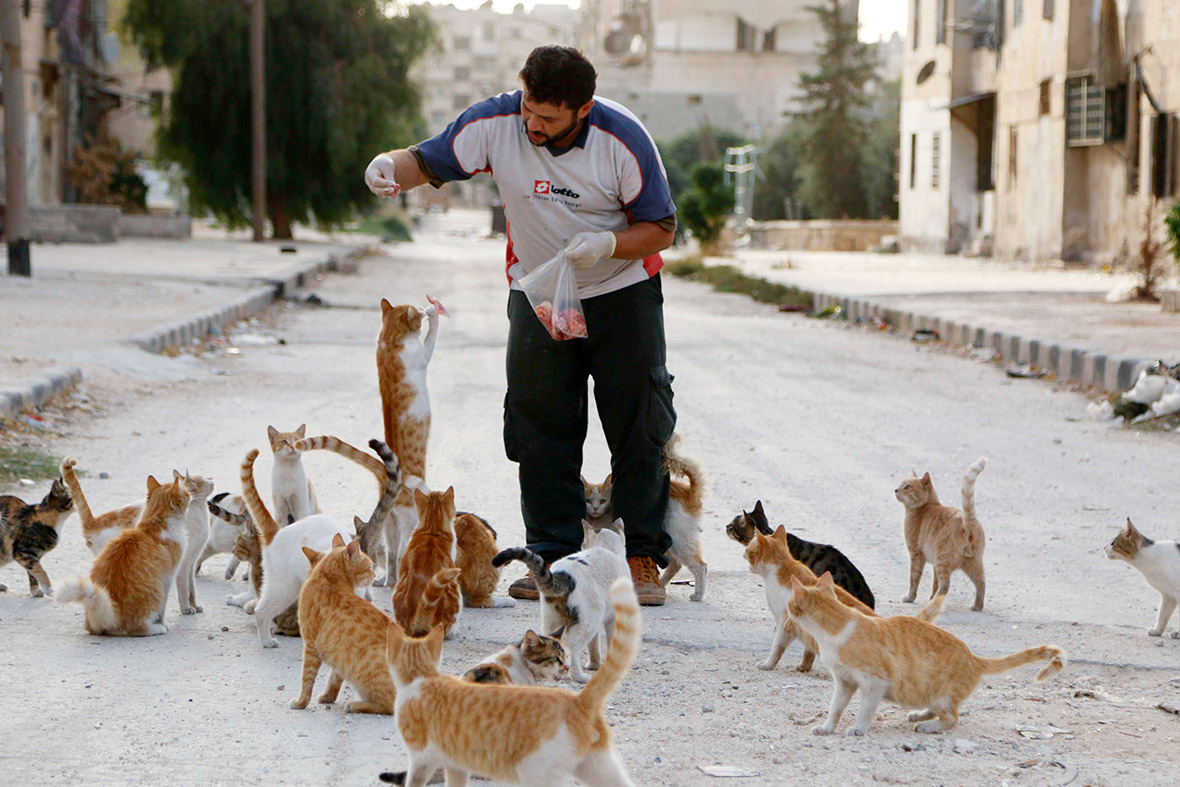 syria catrs