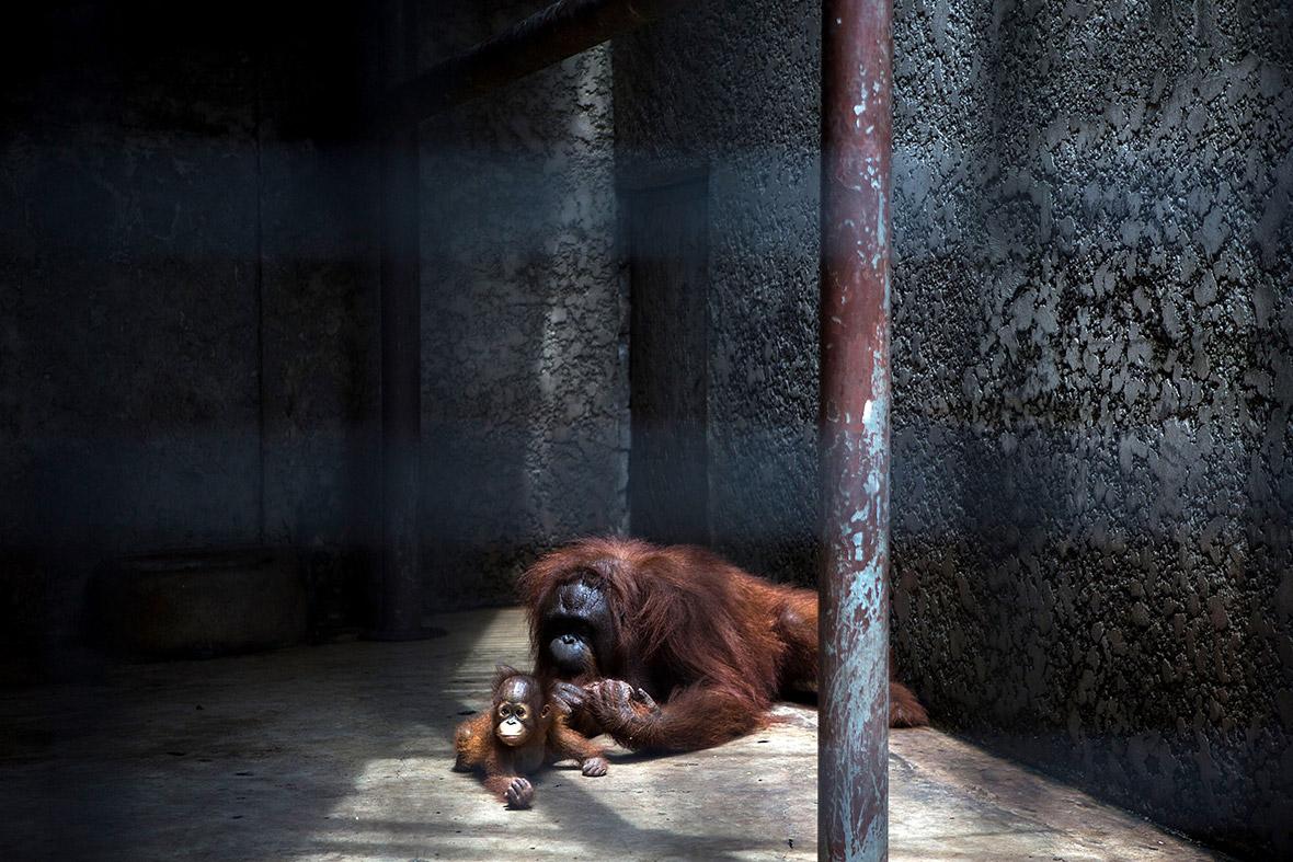 Pata Zoo Bangkok Thailand