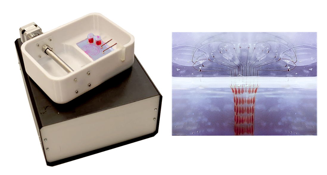 The PrintAlive Bioprinter - a 3D printer that can print a