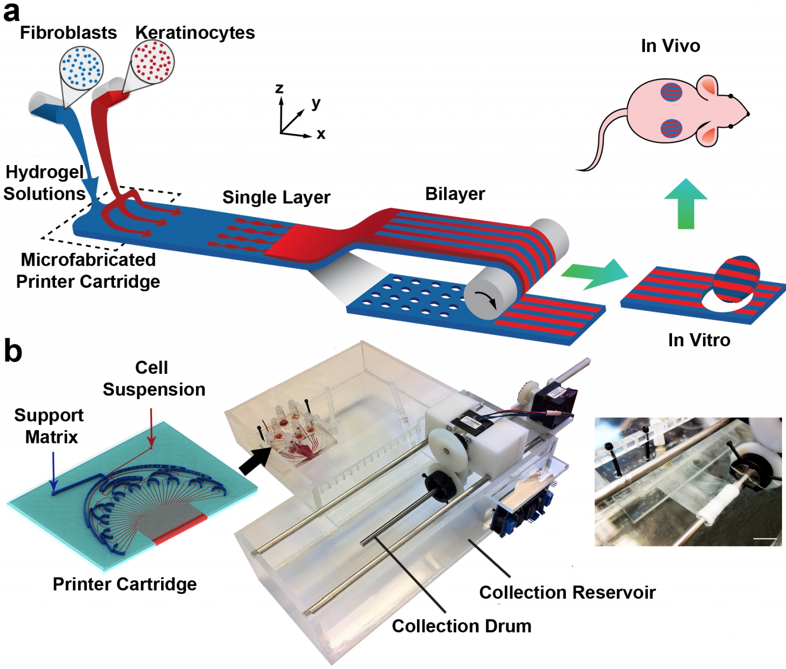 A diagram explaining how the PrintAlive Bioprinter works