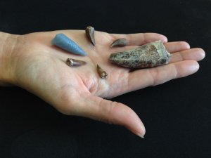 Giant Reptile Tooth