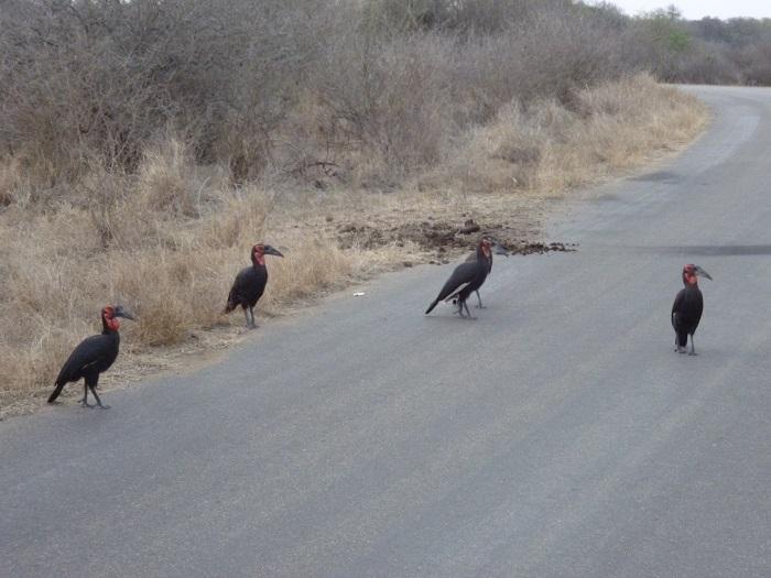 Hornbills' habitats are under threatened