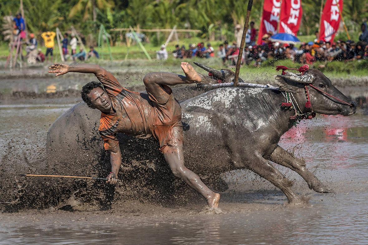 Buffalo Indonesia