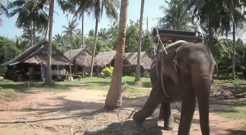 Before they book animal cruelty tourism indutry