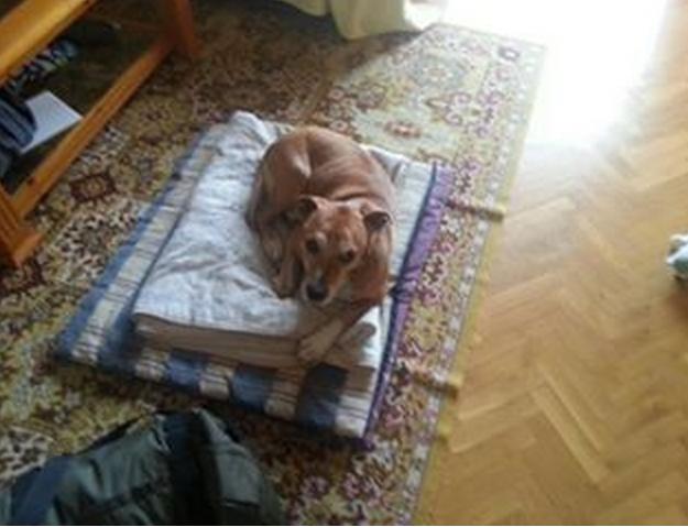 Ebola Spanish nurse dog