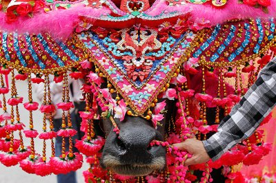 decorated bull thailand