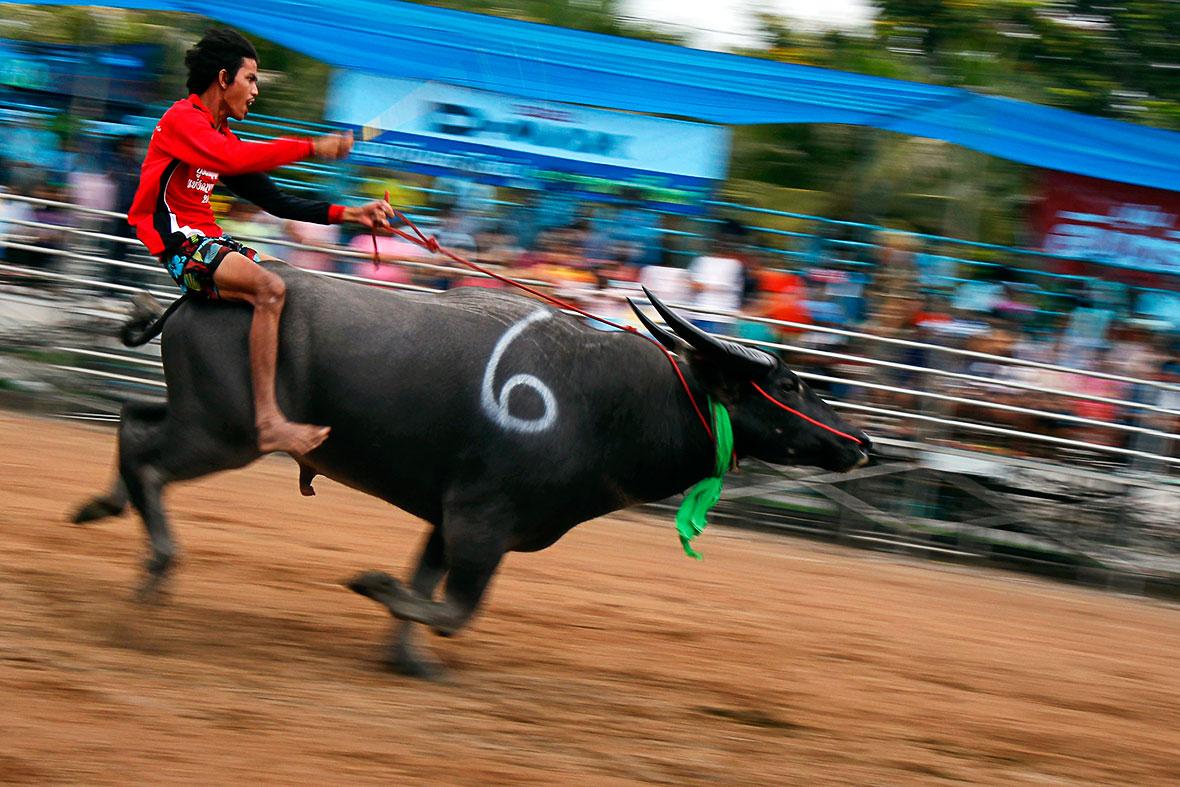 buffalo racing