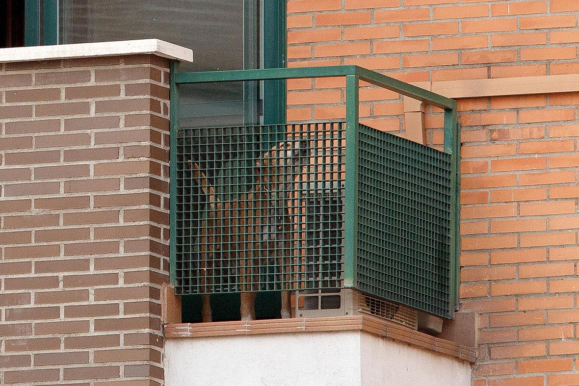 excalibur Ebola dog