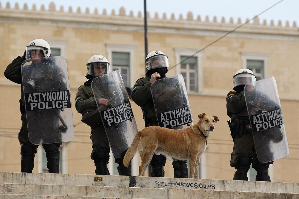Loukanikos Greece riot dog