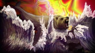 bitcoin bearwhale