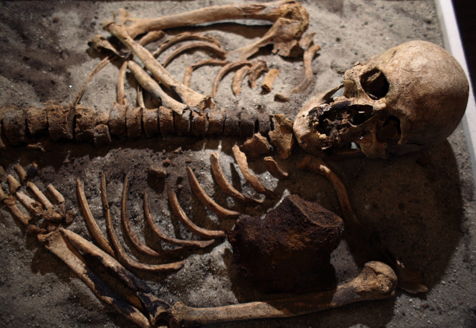 A skeleton pierced with a piece of iron is seen on display during a media event at the National History Museum in Sofia