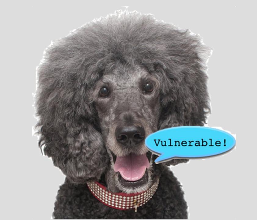 Poodle SSL Vulnerability
