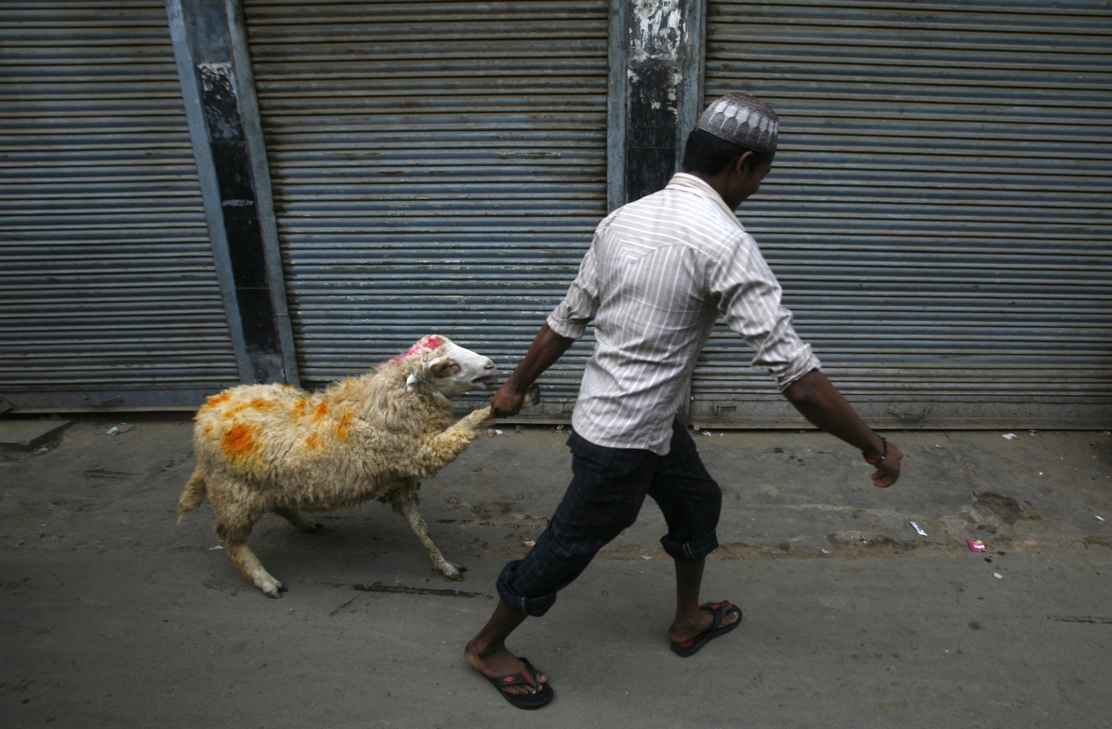 Sheep Eid