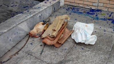 Greece Muslim Attack  Pigs Head Dumped Outside Athens Arab-Hellenic Institute