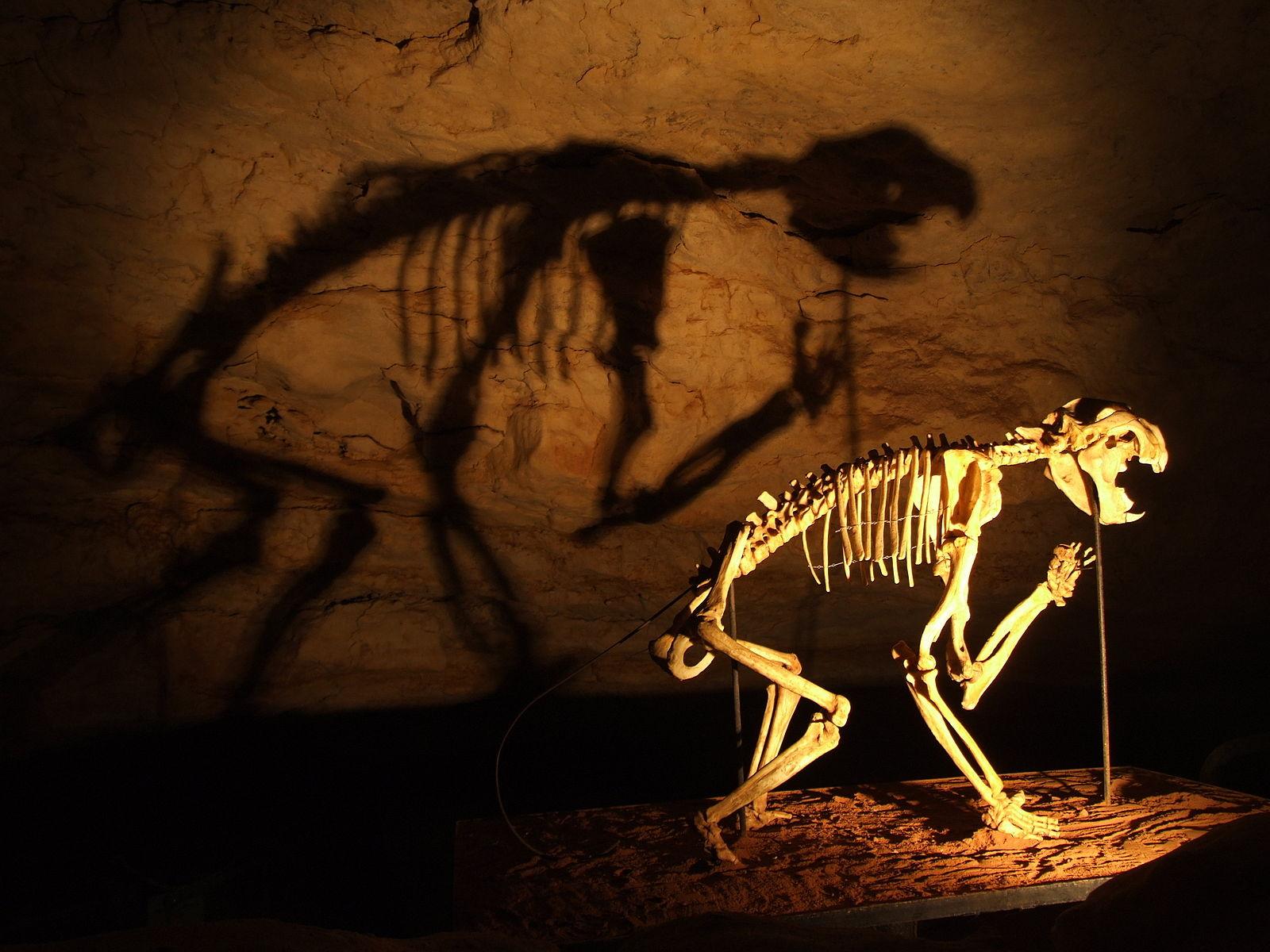 thylacoleo carnifex skeleton in the Naracoorte caves, Australia (WikiCommons)