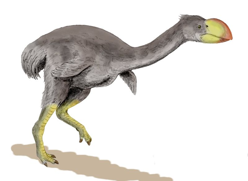 The giant dromornis bird, which some experts believe was carnivorous. (WikiCommons)
