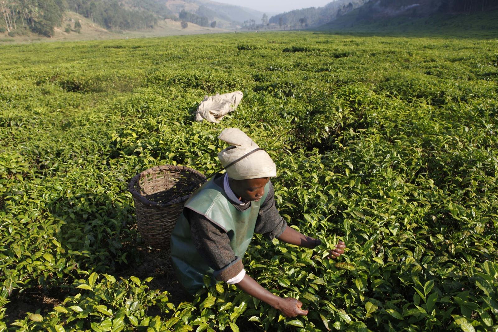 Rwanda economy - agriculture