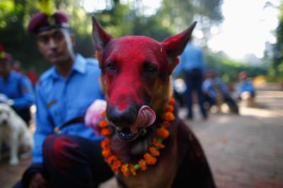 diwali police dogs