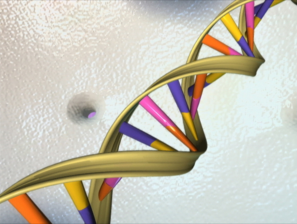 A DNA Double Helix
