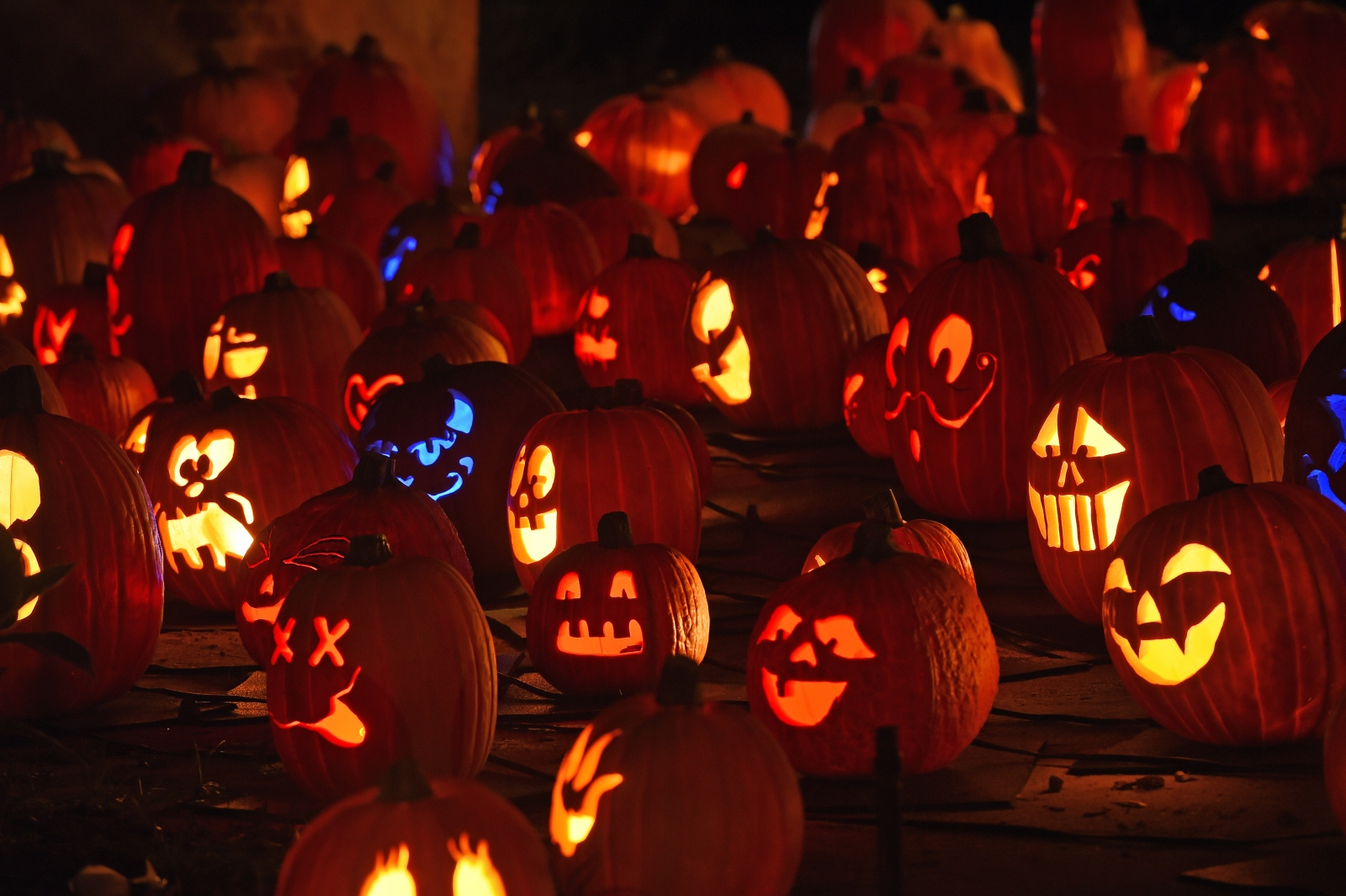 Jack-o'-Lanterns on show at an exhibition in La Canada Flintridge, California