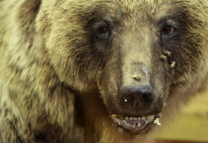 'Bears are dangerous' reminder as many risk attack by striking comedy poses for 'selfie' photos
