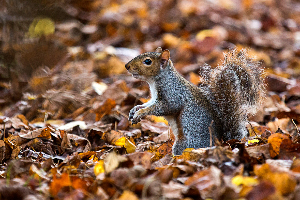 Things to do in London in the Autumn