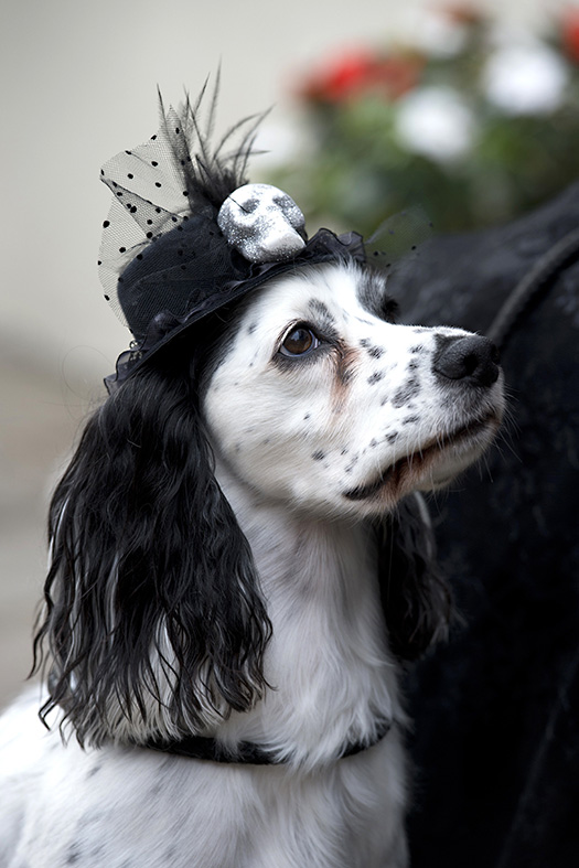 Whitby Goth Weekend Autumn 2014 in Pictures
