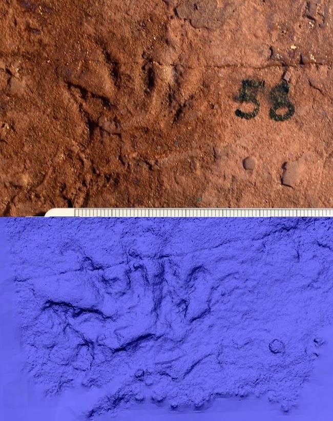 mammal tracks