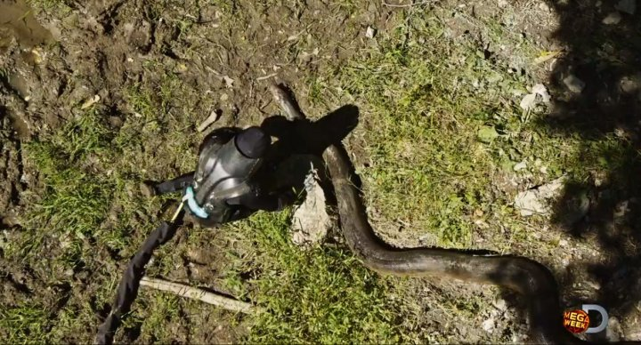 Eaten Alive: Anaconda To Swallow Man on Live TV For Discovery Channel