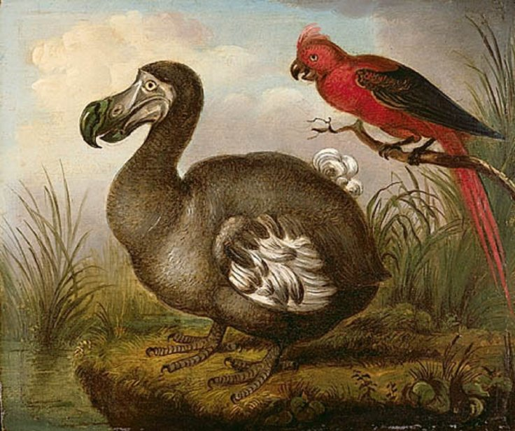 Artists Impression of a Dodo