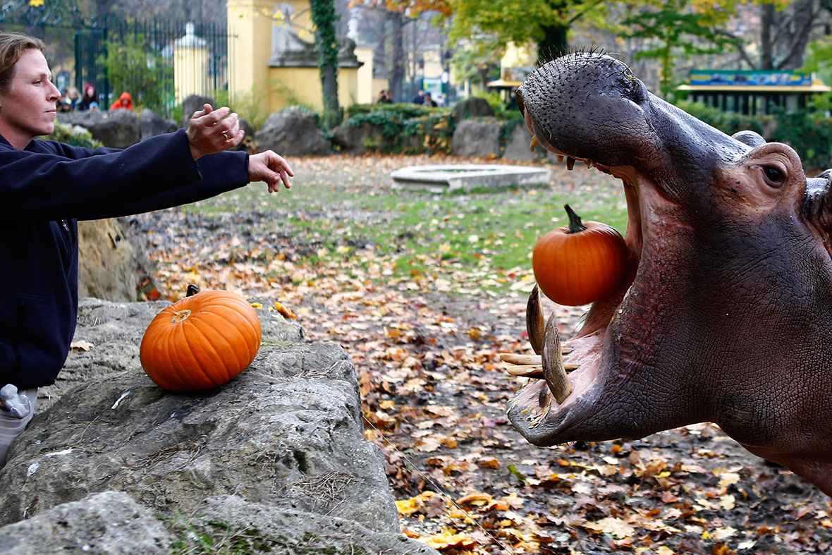 hungry hippo halloween