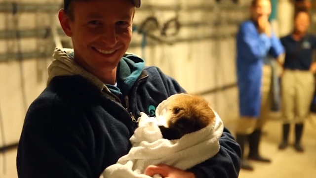 Orphaned Otter gets Second Chance at Chicago Aquarium
