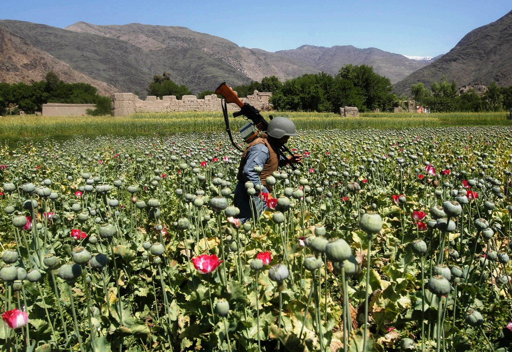 Opium Poppy Cultivation at a New High in Afghanistan