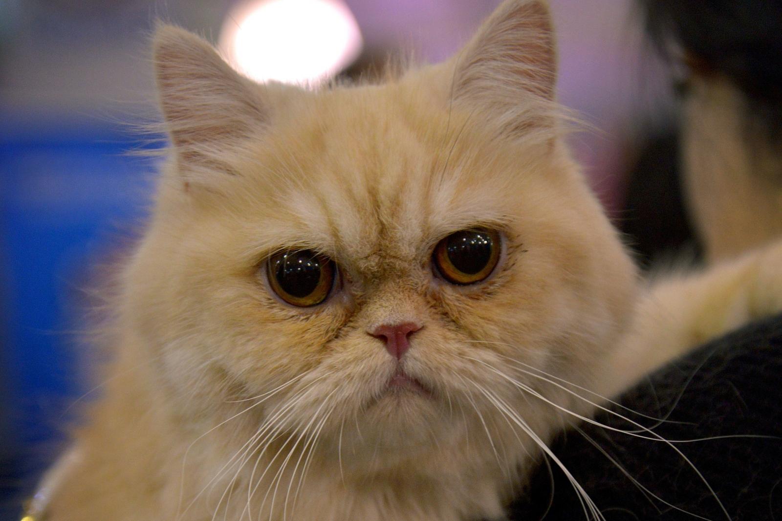 Cat feces linked to schizophrenia