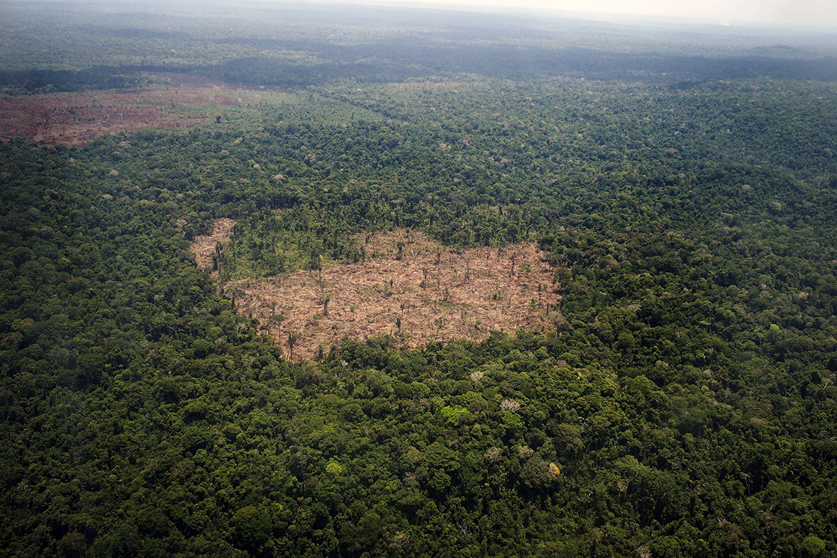 the issue of destruction of the amazon rainforest in brazil Deforestation in the amazon rainforest has been a growing issue in brazil as the the destruction of biologically running head: deforestation in brazil.