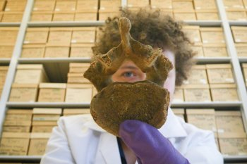 In the skeletal remains Egyptologist Anne Austin found, she saw evidence of both health care and significant occupational stress.