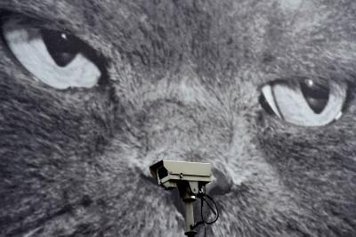 cctv cat