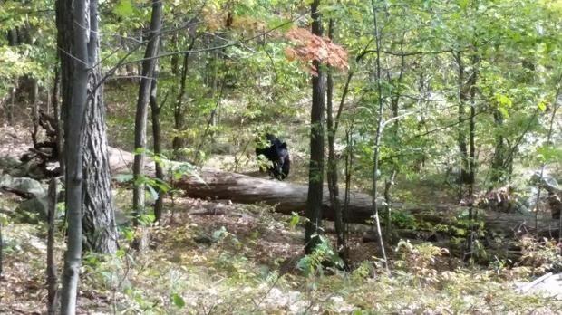Darsh Patel Black Bear Attack US New Jersey Photos