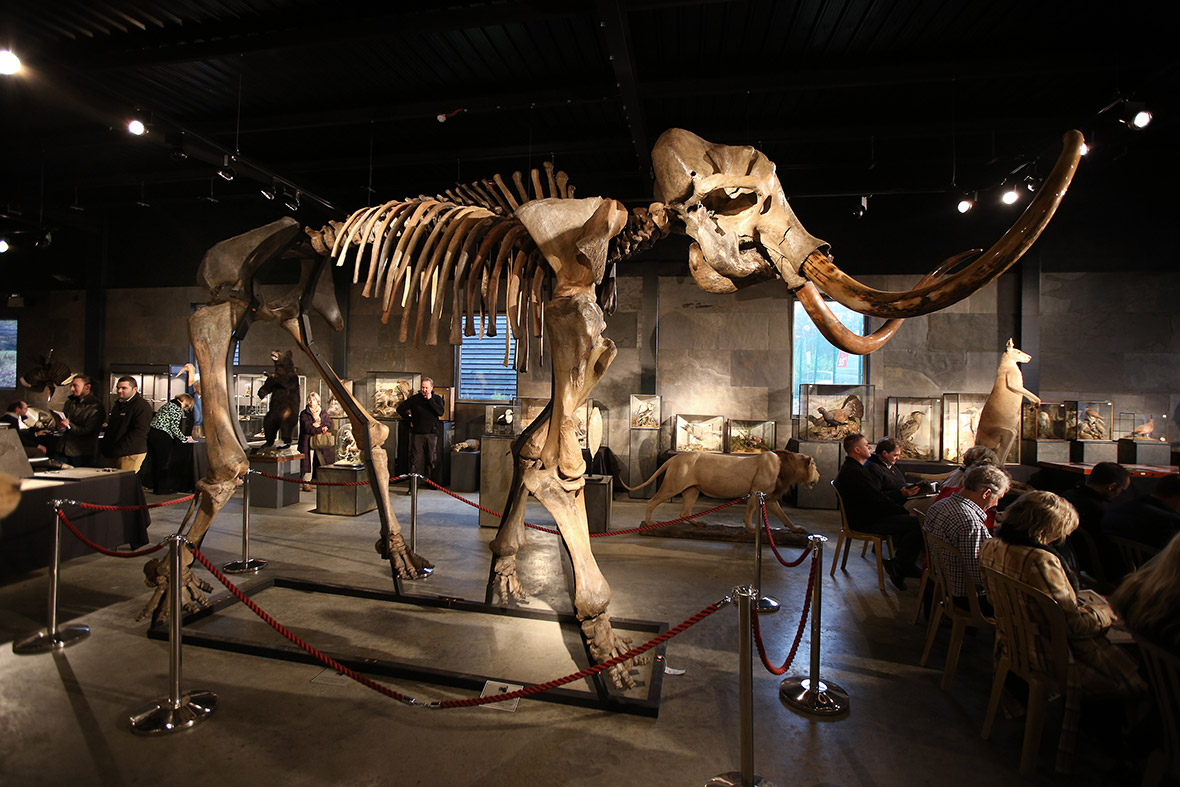 mammoth auction