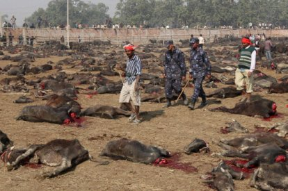 Gadhimai Festival animal slaughter