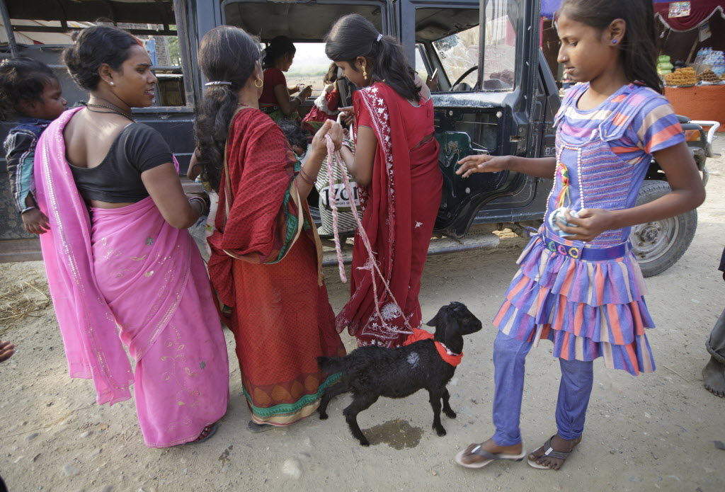 Gadhimai Festival animal sacrifice