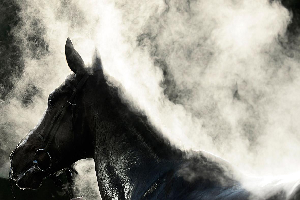 horse steam