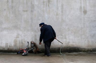 animal cruelty china