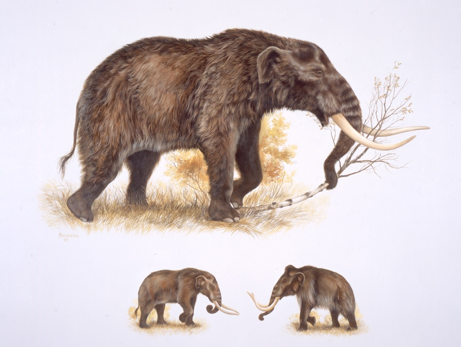 Woolly Mammoths Remains Catastrophic Origins