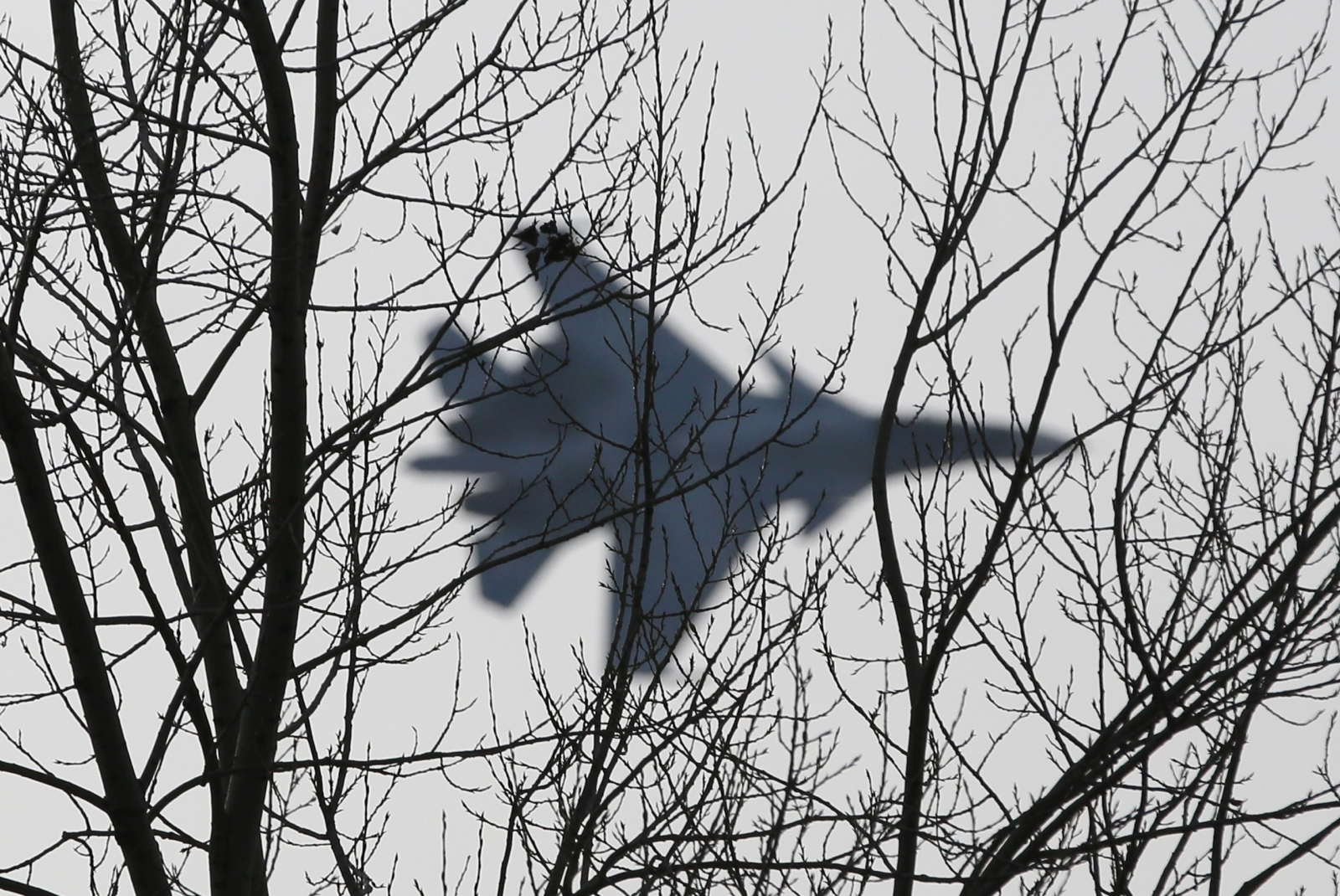 """A jet fighter from the Su-30 SM """"Sokoly Rossii"""" (Falcons of Russia) aerobatic team performs during a show in Krasnoyarsk, Siberia, October 25, 2014. The show is conducted as part of a recruitment drive for Russia's military divisions, targeting the you"""