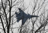"""A jet fighter from the Su-30 SM \""""Sokoly Rossii\"""" (Falcons of Russia) aerobatic team performs during a show in Krasnoyarsk, Siberia, October 25, 2014. The show is conducted as part of a recruitment drive for Russia\'s military divisions, targeting the you"""