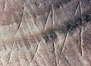 500,000 year-old engravings discovered on Indonesian shell