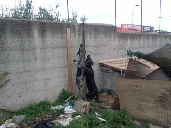 Sicilian anti-mafia journalist Pino Maniaci has dogs hanged by mob